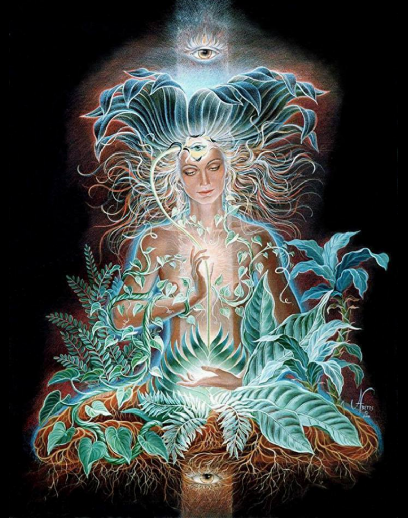 Ayahuasca Mother Plant Heals and Reveals All the hidden secrets of the Universe