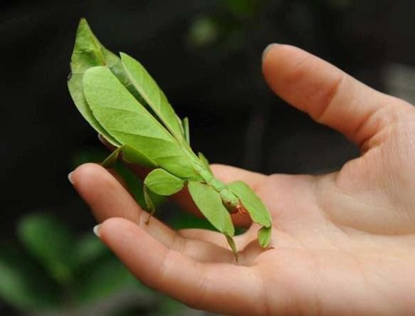 leaf-bugs2